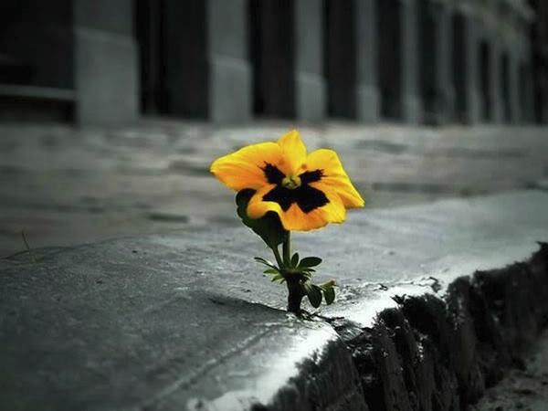 road-flower-sm600
